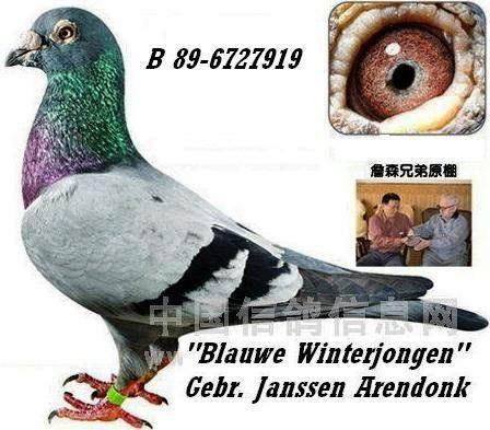 "Der berühmte ""Blauwe Winterjongen"". Er war in den letzten Jahren einer der besten Vererber bei den Gebrüder Janssen in Arendonk"