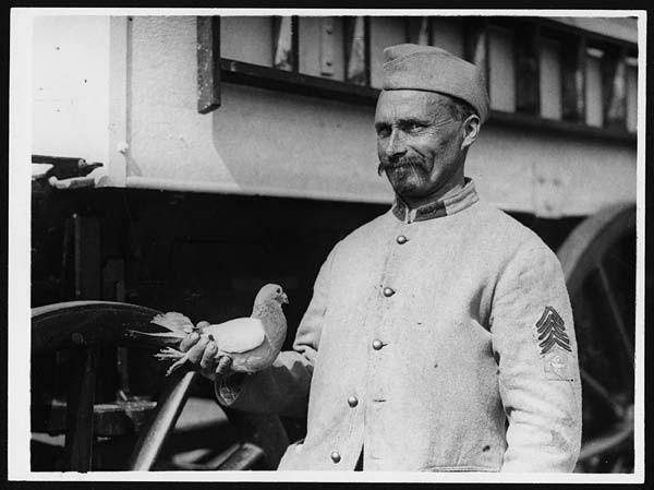 Auch die Bumerang-Tauben wurden im Meldediest eingesätzt
