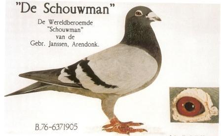"""De Schouwman"" Er flog verschiedene 1e Preise und stammt aus ""Zoon Oude Merckx"" x ""Kweekduif van 69"""