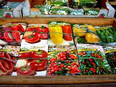 イタリア野菜の種(袋入り)