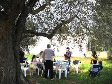 オリーブの木の下でお食事会
