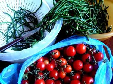 うちのトマトと長ーいサヤインゲン