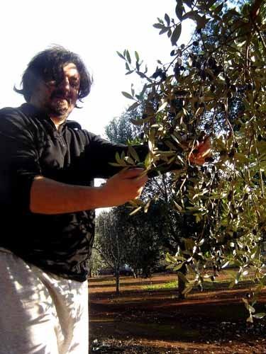 オリーブを手摘みするジュセッペ