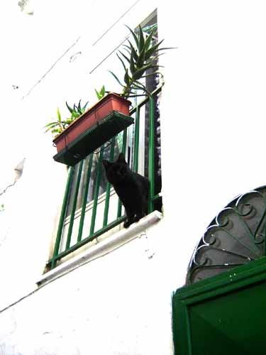 オストゥーニ旧市街の黒ネコ
