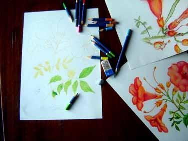 農園の花を写生(ボタニカルアート)