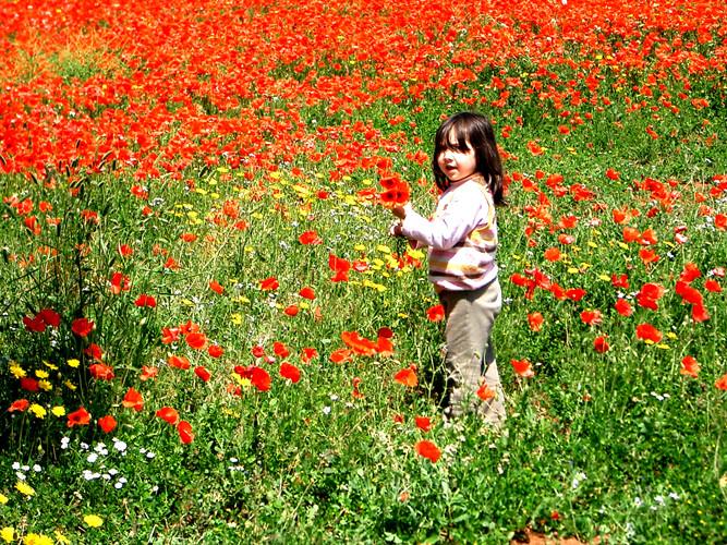ポピーを摘むアシア Hitomi-Itoさん撮影
