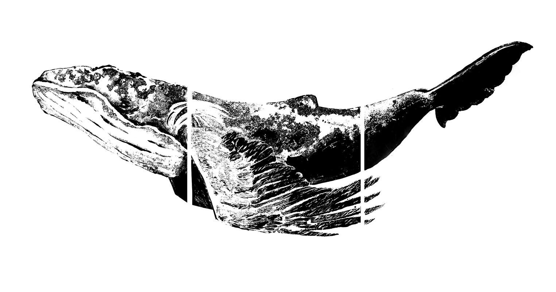 Chimera, 230 x 110 cm, encre sur papier