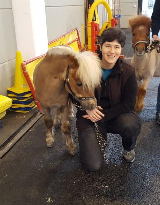 """Pferd Bodensee 2018, """"Winston"""" kurz vor seinem Start in den Agility Parcours"""