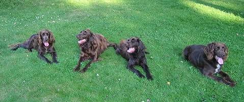 Hunde aus dem H-Wurf vom Paradies