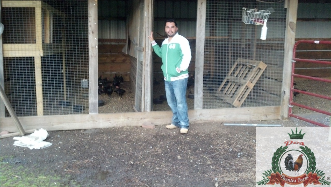 Una de las areas de crianza de pollos de Bob Correy