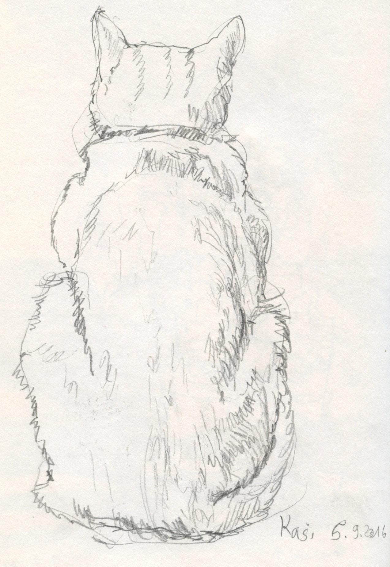 Zeichnung Kasi