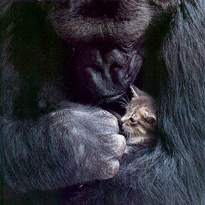 Photo d'un chat et d'un gorille