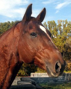 Photo-peinture-cheval-equitation