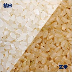 泉太の農家直送米 (こしひかり)