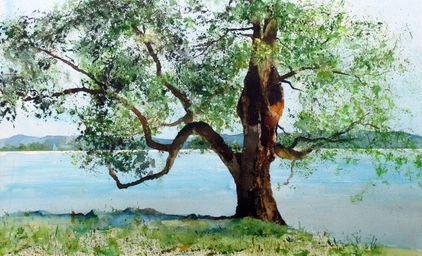 Mein Freund, der Baum. Aquarell (2019). Als Originalbild erhältlich