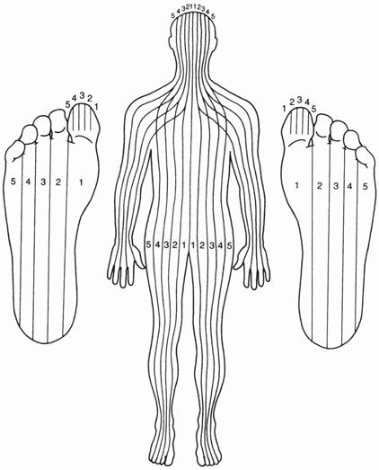 Le corps humain divisé en 10 parties par le Dr Fitzgerald
