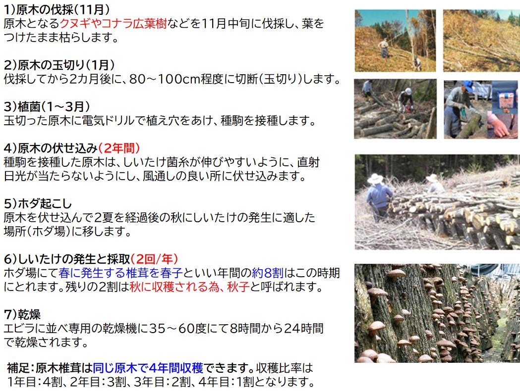 原木椎茸の栽培方法