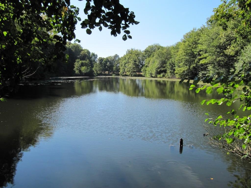 Un des étangs de la forêt