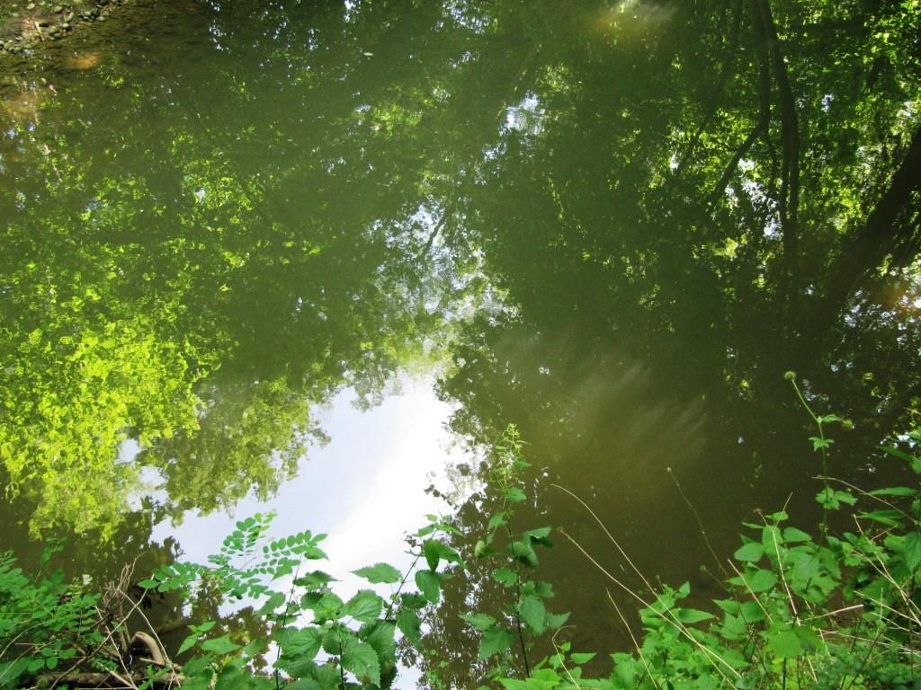 forêt magique de Cibeins dans l'Ain