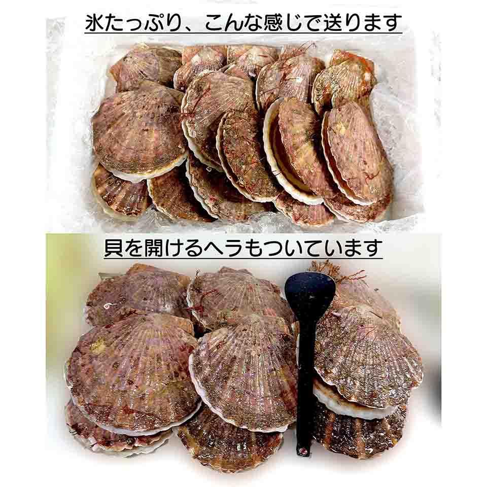日本で一番美味しいと言われているほたてを生きたままお届けします