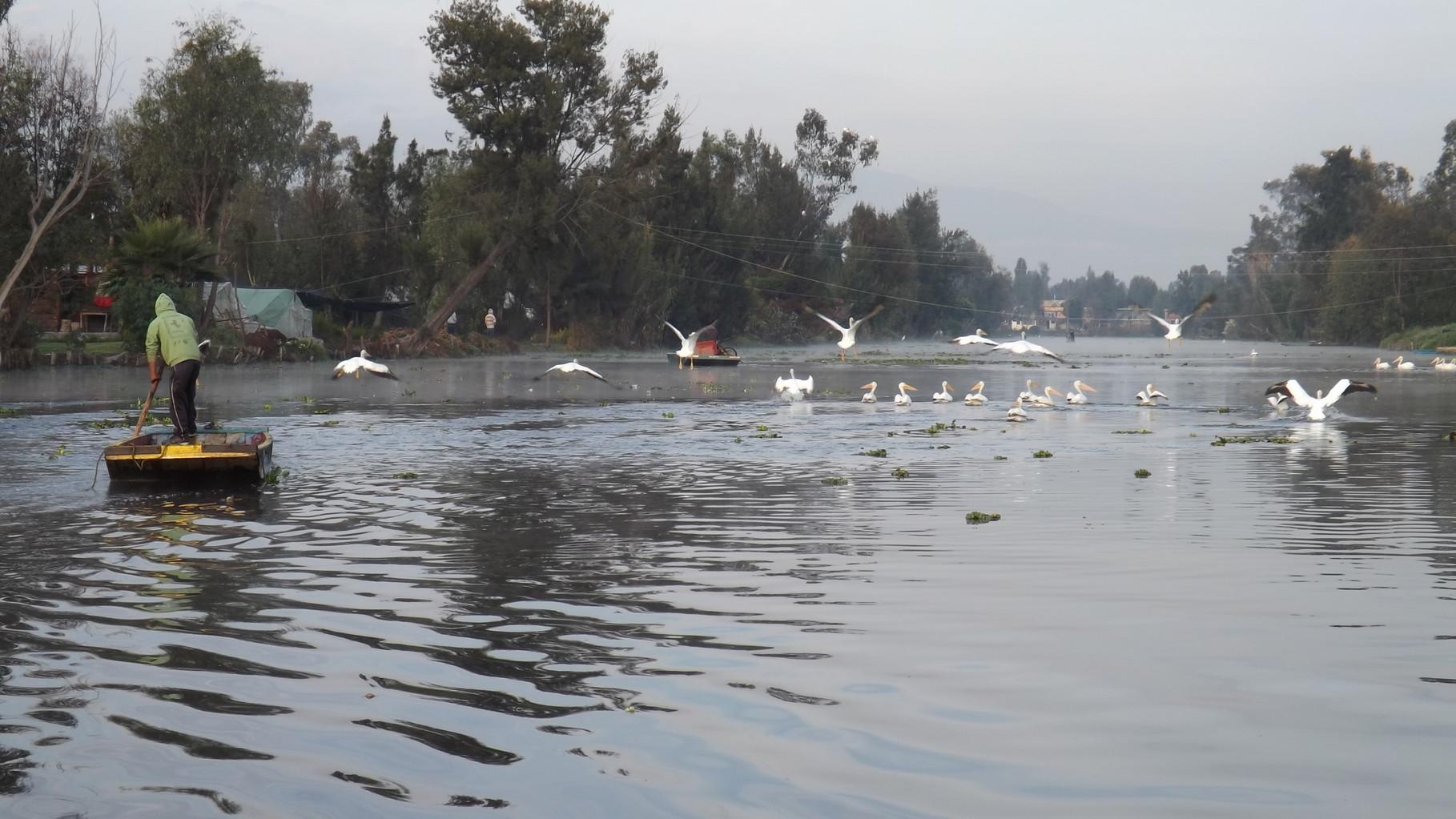 Las aves son de la fauna más vista en los canales.