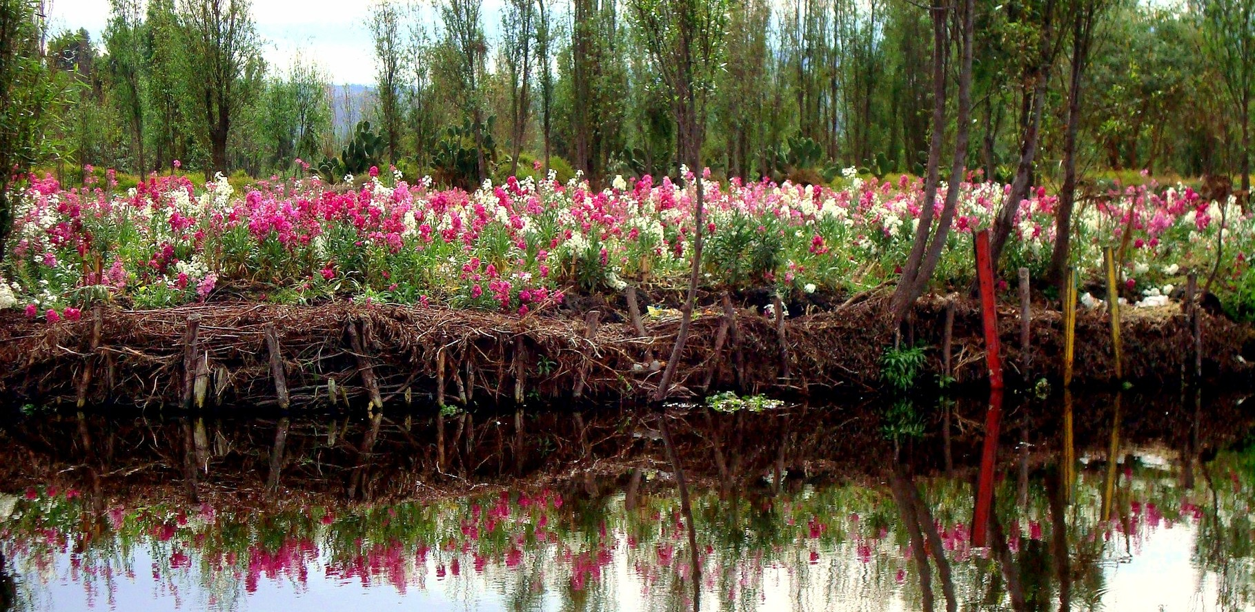 """Los """"perritos"""" forman parte de los cultivos de flores que se siembran en Xochimilco."""