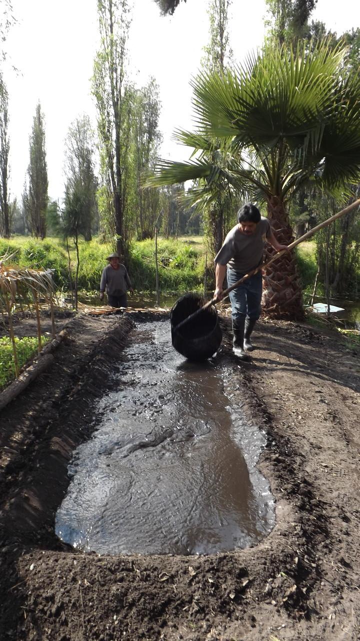 """""""El agua lodo"""" es utilizado para hacer el """"chapin"""", técnica tradicional de Cultivo en Xochimilco."""