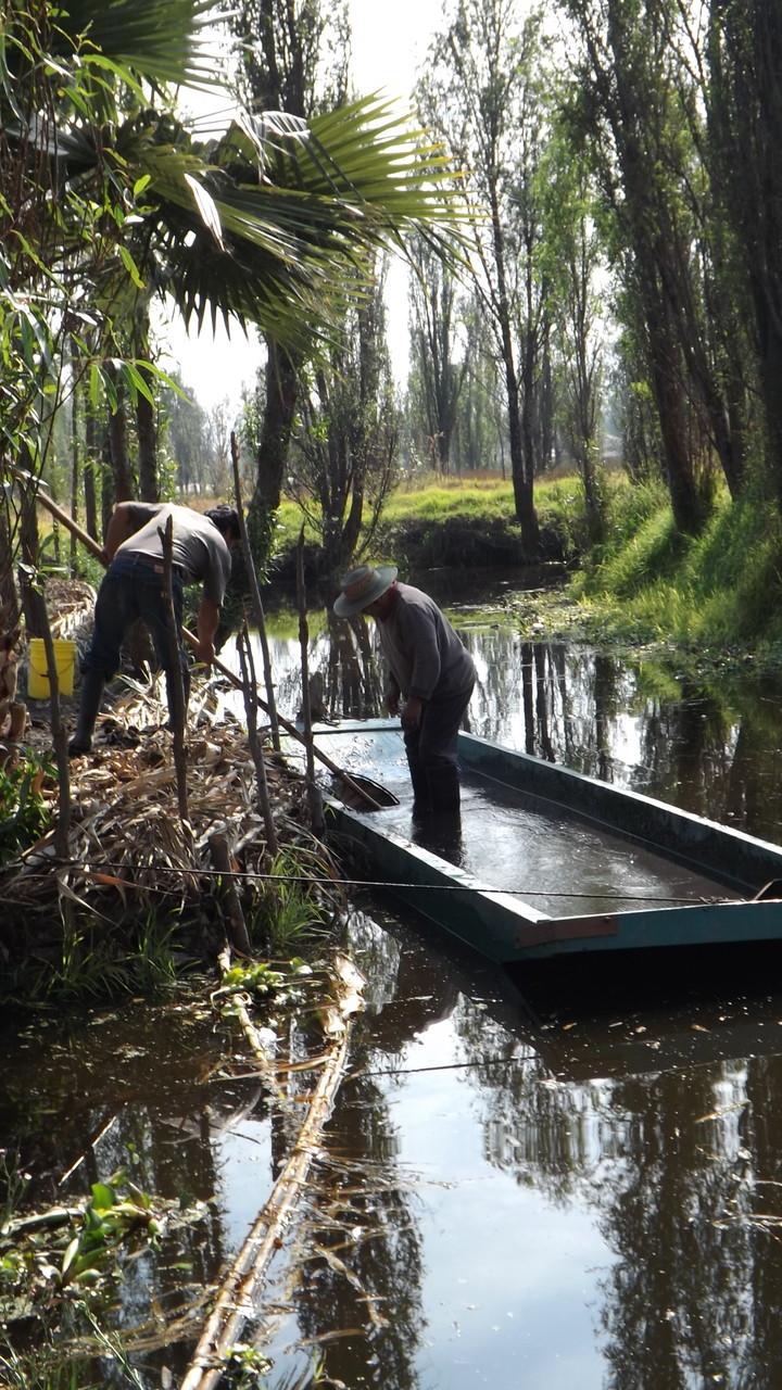"""""""El agua lodo"""" es un abono natural que se extrae del fondo de los canales."""