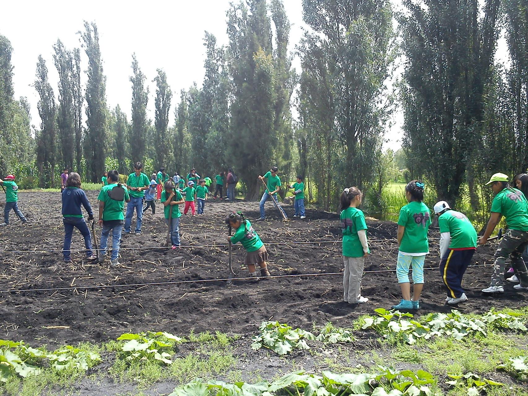 En la Chinampa Demostrativa, los niños aprenden como cultivar la tierra.