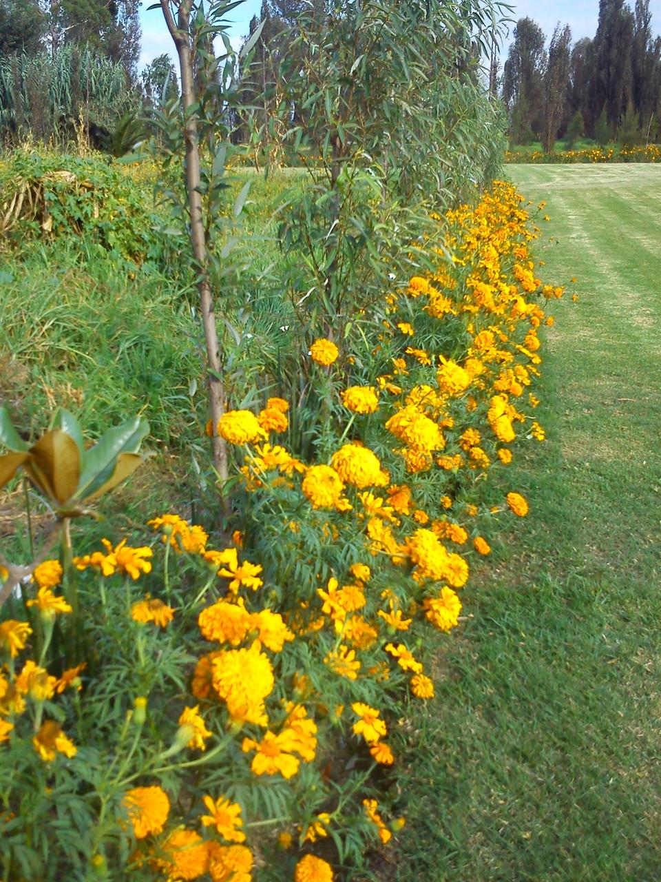 Dependiendo de la época en que nos visites podrás disfrutar de los diferentes flores de temporada.