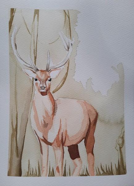 DEER : aquarelle sur papier 23 x 31 300 g - 20 €