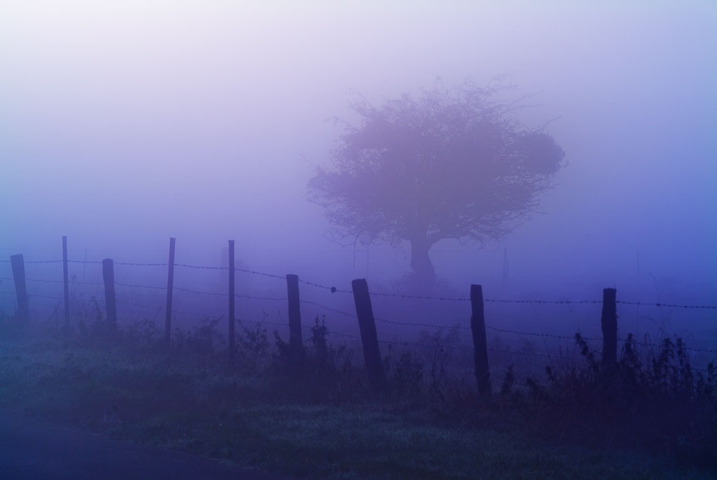 Brouillard au petit matin Paysage de Picardie