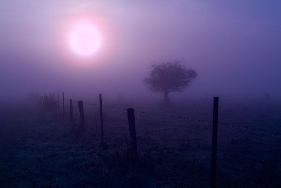 Pommier au petit matin dans la campagne Picarde.