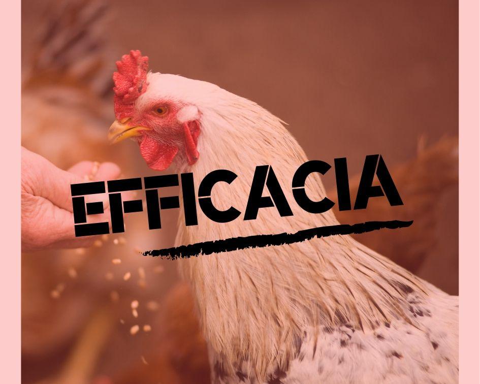 """Efficacia...perché è importante avere un pensiero...""""efficace"""", spiegato attraverso la fiaba della Gallina dalle uova d'oro...."""