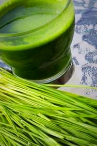 frisch gepresster Weizengrassaft Weizengras shot Gerstengrassaft