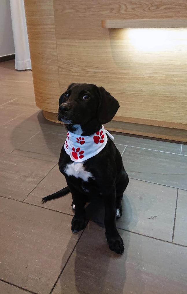 Bandana für Hunde, mit Sublimations-/Flex- oder Flockdruck