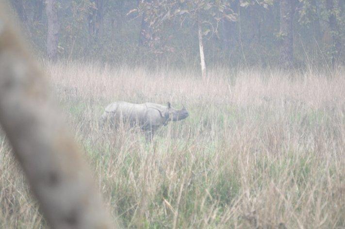 Great one-horned Rhinoceros