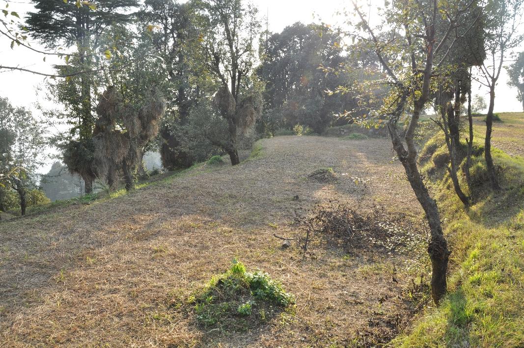 Terraced fields in Naddi village
