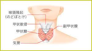 甲状腺異常の方へのオーダーまくら