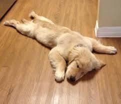 うつ伏せで寝てた