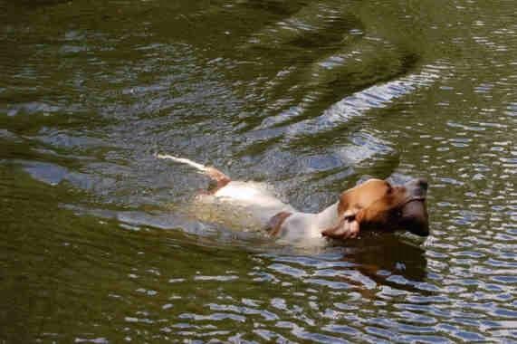 Django schwimmt