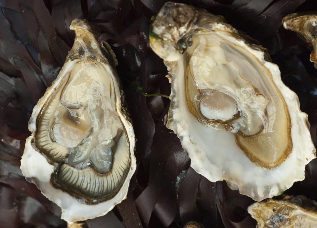 Austern sind in der Bretagne immer frisch. Und wo könnten sie besser sein?