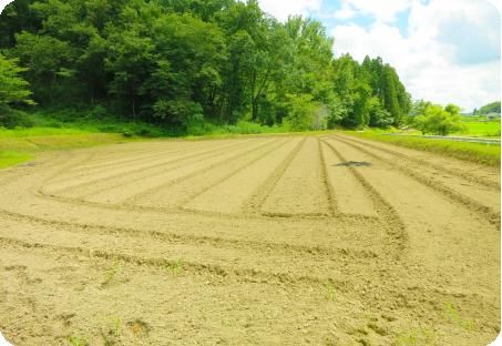 耕作放棄地を農地へ