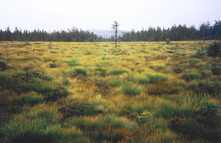 Sonnenberger Moor (Harz, Deutschland)