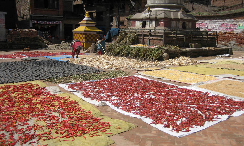 Séchage des épices
