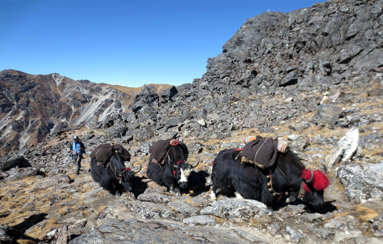 EN MONTANT AU COL SHIELELE  trek Kangchenjunga  Photo Jean-Luc Michod