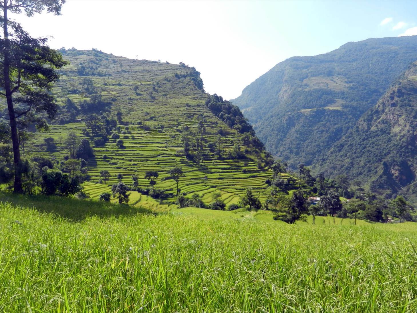 Naar Phu Tilicho - Paysage verdoyant du début du trek dans la vallée de l'Annapurna - Photo Eric Losserand