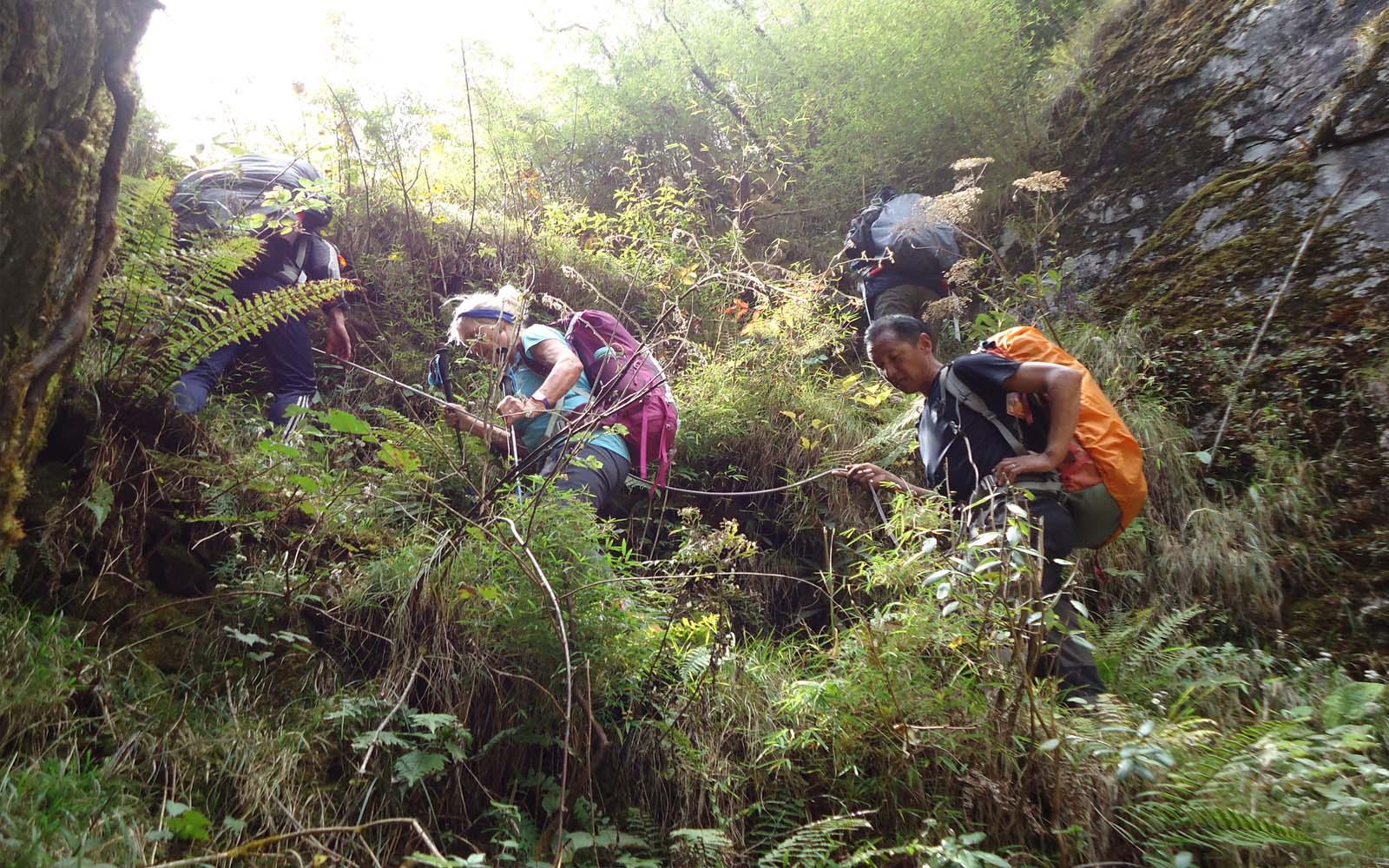 Jungle lors de la descente - Photo Michael Bois