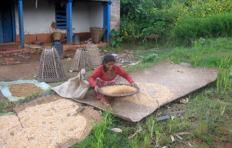 Travail dans les fermes Langtang Photo Noelle Touma Khumbu Shangrila