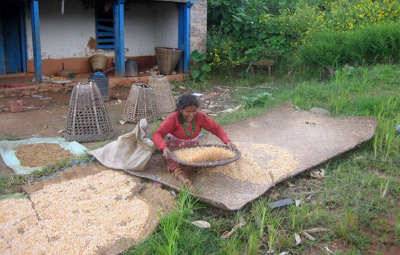 Travail dans les fermes Langtang Photo Noelle Touma